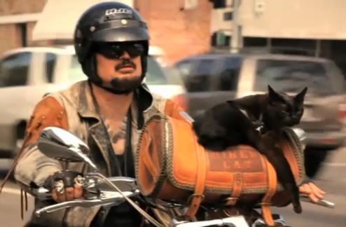 Biker Cat Guy