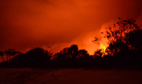 Life Is the Fire That Burns [Lyrical PhotoEssay of an Australian Bushfire]