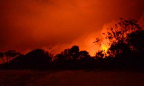 Leaping Flames Credit_KirraPendergast-6079