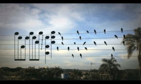 This Man Looked at Some Birds on a Wire and Saw Musical Notes. Listen to How It Sounds. [Hint: Amazing]