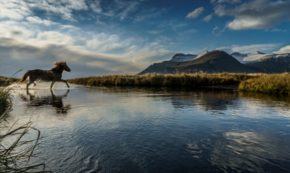 Outlaws, Trolls and Berserkers: Meet the Hero-Monsters of the Icelandic Sagas