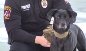 Police, Humanity and Man's Best Friend: An Ode to Honor