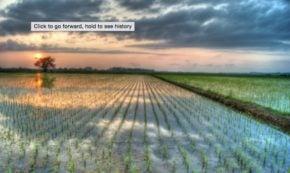 Way Cool Japanese Rice Planting Machines