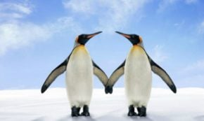 15 Lessons About Love You Can Learn from Penguins (Yes, PENGUINS)