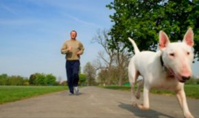 How to Keep Man's Best Friend Healthy All Year Round