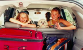 Traveling with Your Family Dogs