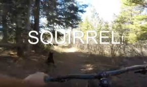 Mountain Biker Races his Dog in the Ultimate Display of 'Man's Best Friend'