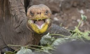 What Fighting Tortoises Can Teach Us About Our Political Climate