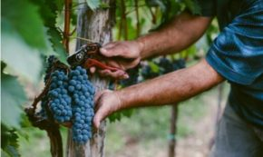 10 Timeless Lessons I Learned about Business from the Founders of the Biggest Wine Brand in America