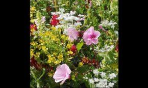 A Flower Patch Surprise