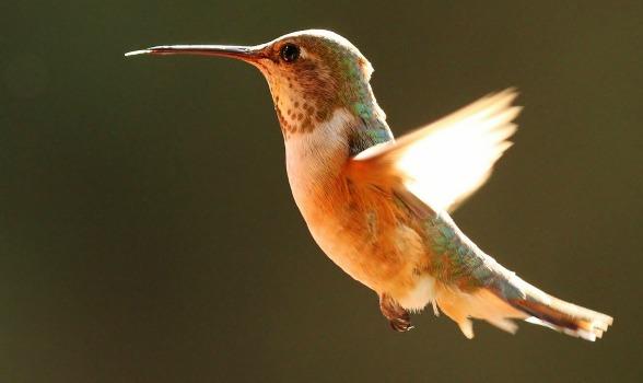 Guaranteed Libido Killer – The Hummingbird Husband