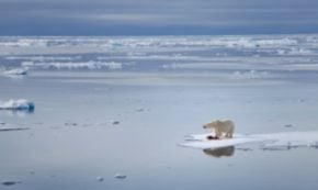 A Brief Note on Natural Fibres and Climate Change, or Always a Polar Bear