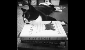 Catalog: An Essay in Nine Lives