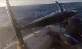 Fisher Hooks Marlin, Marlin Has Other Ideas