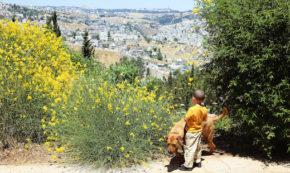 Jerusalem's Naked Injustice