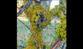 Nature's Velvet Cloak