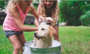 Teaching Your Kids the Responsibilities of Caring for a Dog