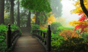 100 Words on Love: MAGIC BRIDGES