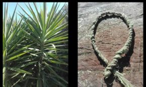 From Plant to Cordage in One Hour