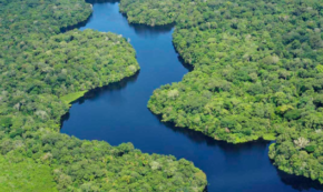 How You Can Help Prevent the Deforestation of the Amazon