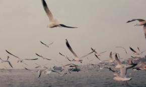 Saṃsāra [Video]