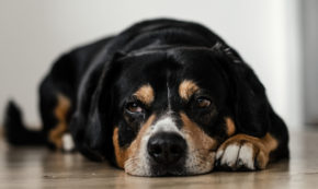 In Order to Live a More Fulfilling Life, Old dogs Must Learn New Tricks