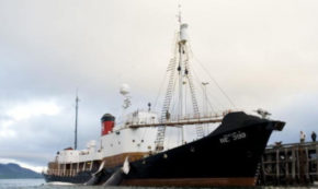 Icelanders Decidedly Shruggo About Whale Hunting