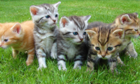 Herding Cats: A Simple Method for Working With the Disorder of Our Lives