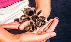 Hold the tarantula