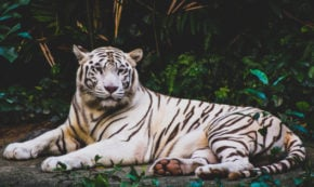 Emergent Design ~ Finding the White Tiger