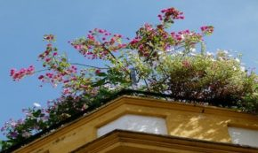 The Benefits of Having a Roof Garden