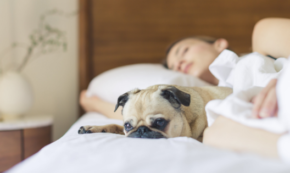 Are You Getting Enough Rest? – Why Sleep Matters