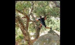 Tree Happy Climber