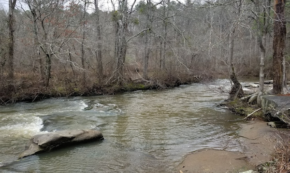 Walk With Me – Hiking Line Creek Again