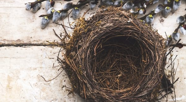 Image result for empty nest
