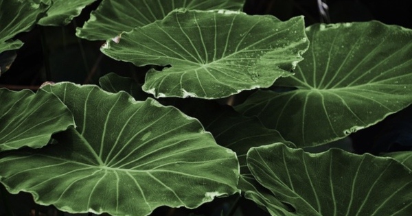 How can you envision artificial photosynthesis technology helping the planet?