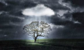 Wish for a Storm of Mass Insight
