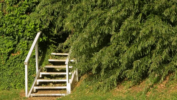 Cypress dating CS gå matchmaking inte fungerar 2015