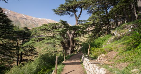 I Remember: Lebanon Through Five-Year-Old Eyes
