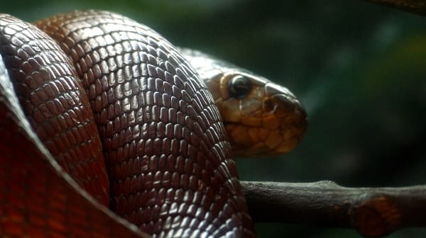 The Cobra Effect Redesigned (With an Antidote)