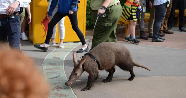 aardvark love, magic of disney's animal kingdom, tv show, docu series, season 1, review, national geographic, disney plus