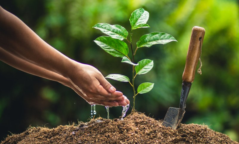 The Solution To Global Hunger and Poverty: Plant More Trees - The Good Men  Project