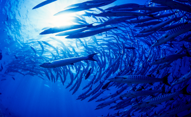 Targeted Ocean Protection Could Offer 3x the Benefits