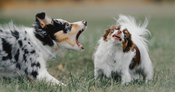 I Solved My Dog's Barking Problem
